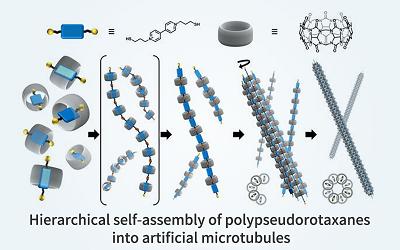 POSTECH Developed Self-Assembled Artificial Microtubule Like LEGO Building Blocks